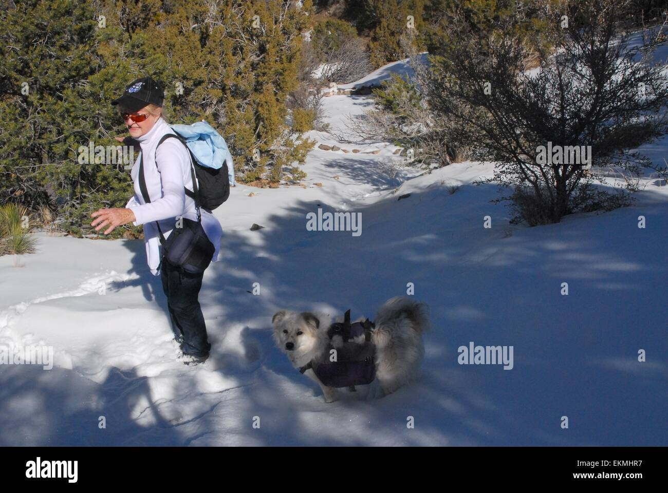 Senior Citizen and her dog on steep snowy section of a trail in Sandia Mountains of New Mexico - USA - Stock Image