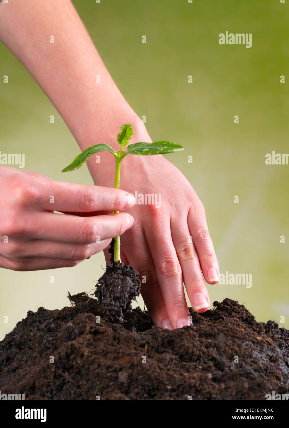 Woman hands seeding seed into pile of soil - Stock Image
