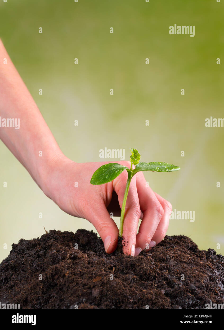 Woman hand seeding young plant into pile of soil - Stock Image