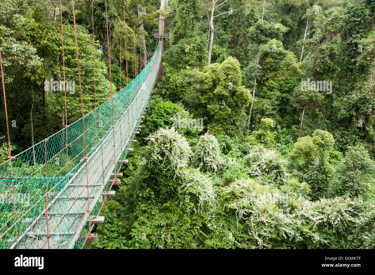 Canopy walk in the Danum Valley Conservation Area, Borneo, Malaysia Stock Photo