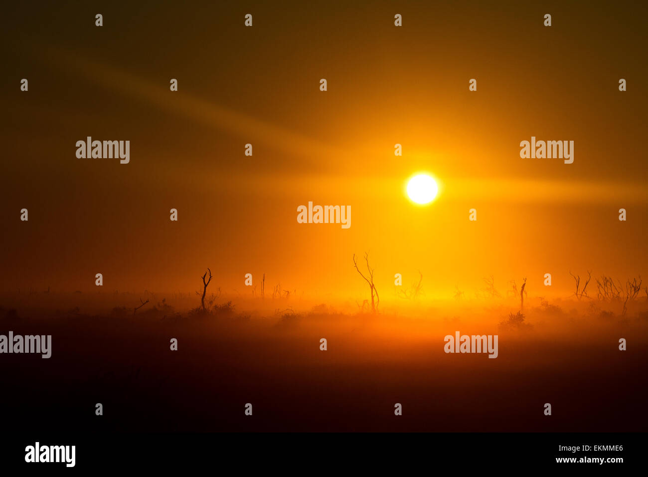 Apocalypse on a wake of a foggy and sunny morning in the Australian outback - Stock Image