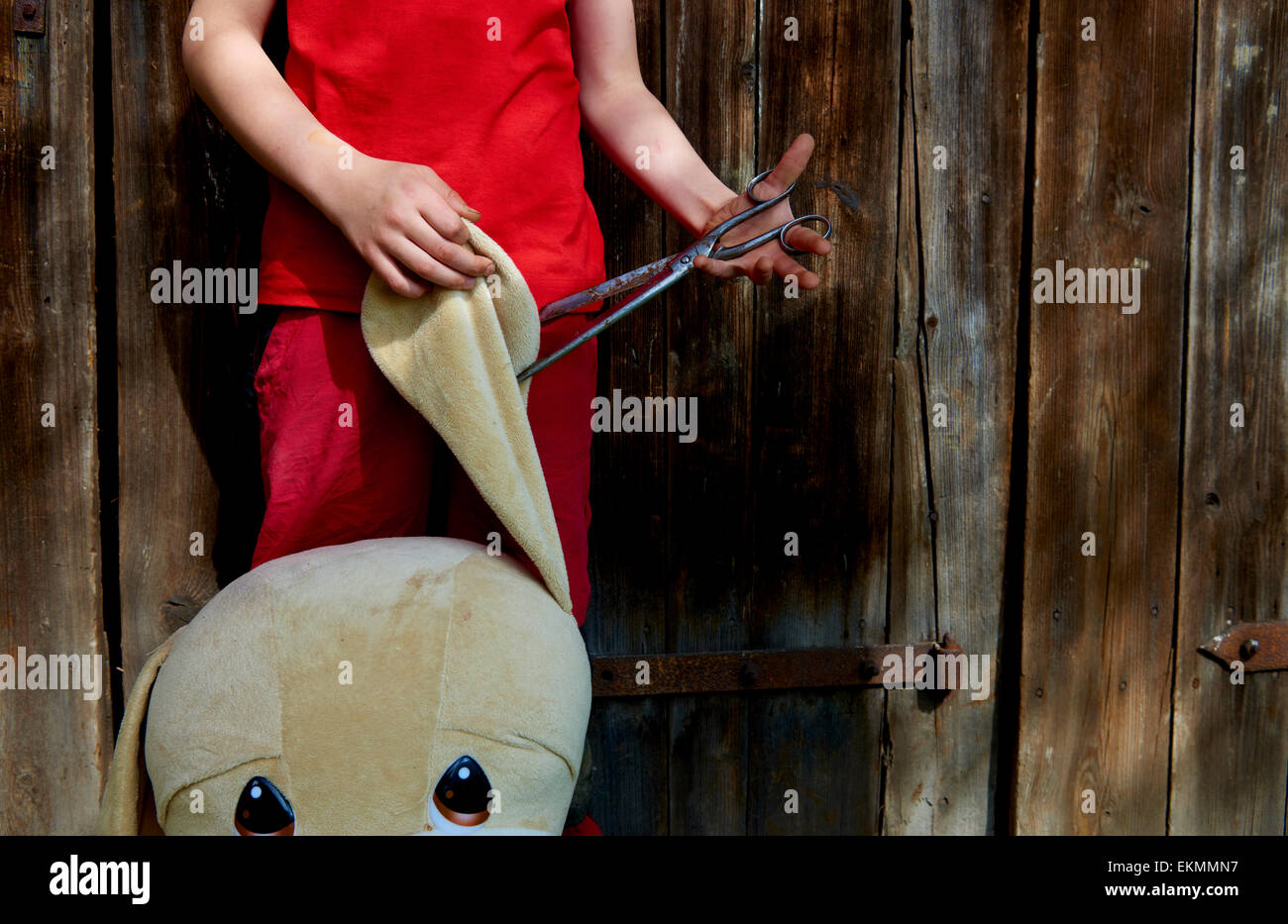 Cruelty Child boy torturing animal pet dog toy - ear cut with scissors - Stock Image