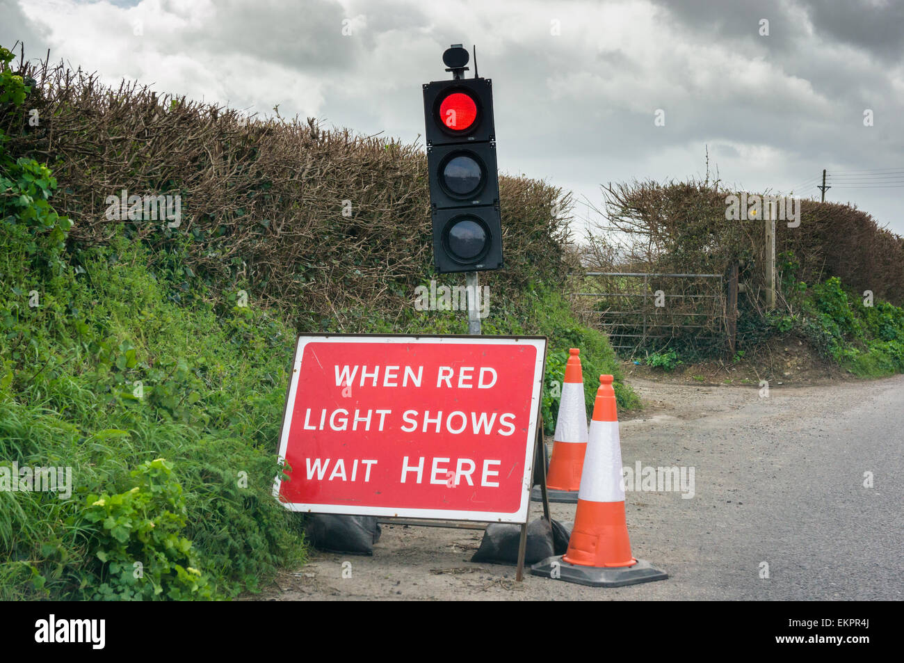 Traffic lights on a rural country road, England, UK - Stock Image