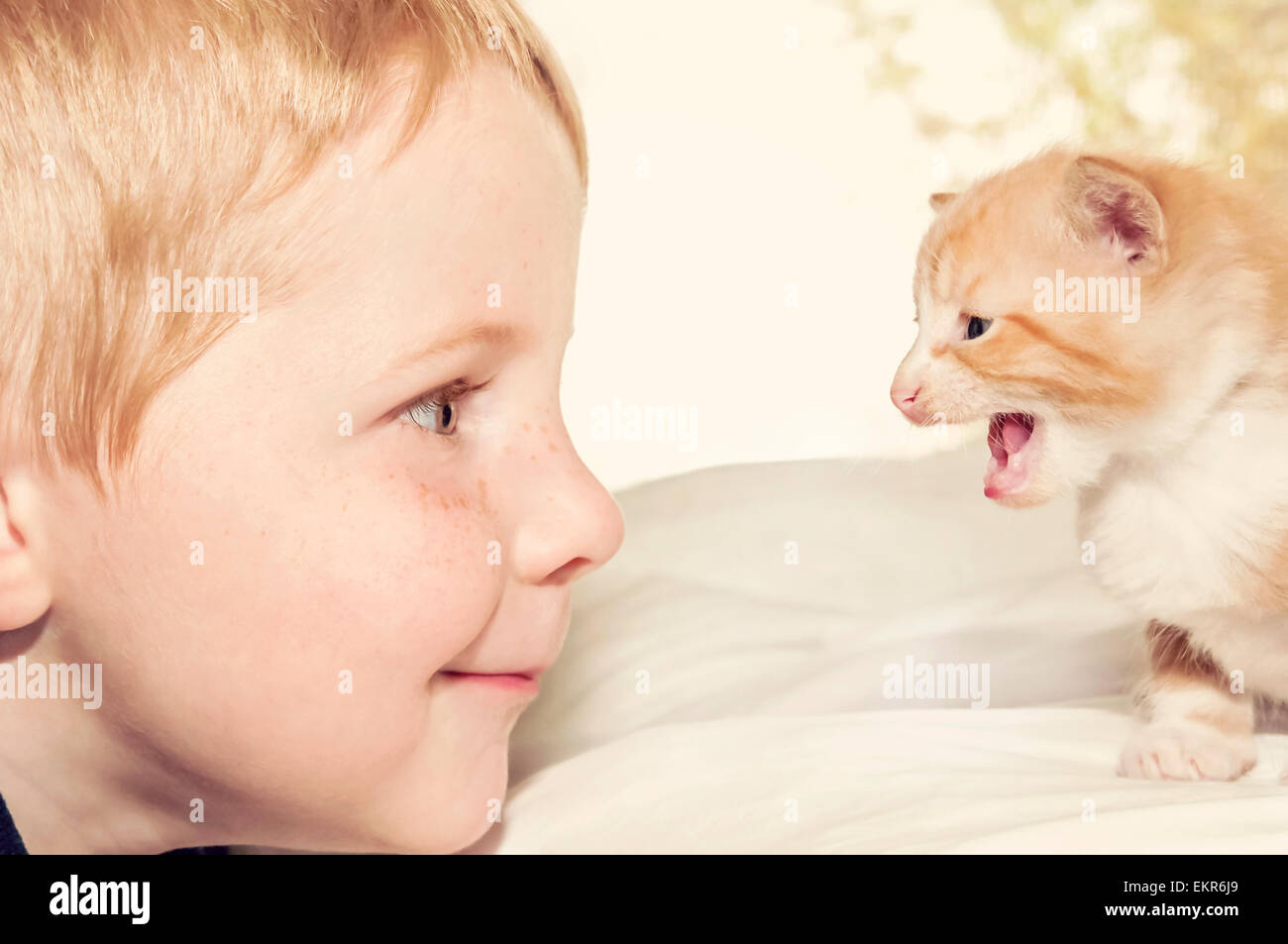 close view of boy and kitten faces - Stock Image