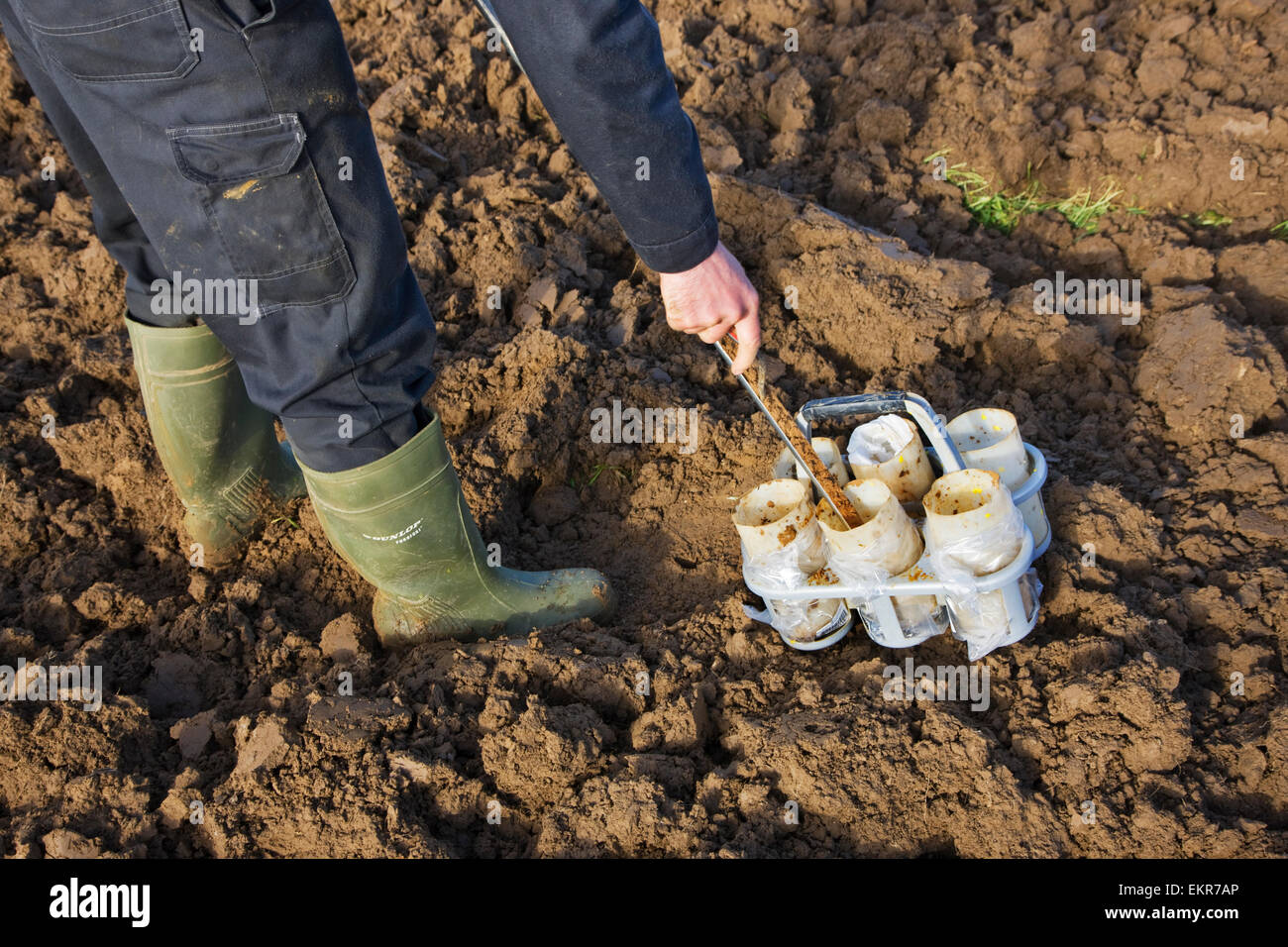 Researcher carrying out soil test by taking manual earth core samples from field with metal corer - Stock Image