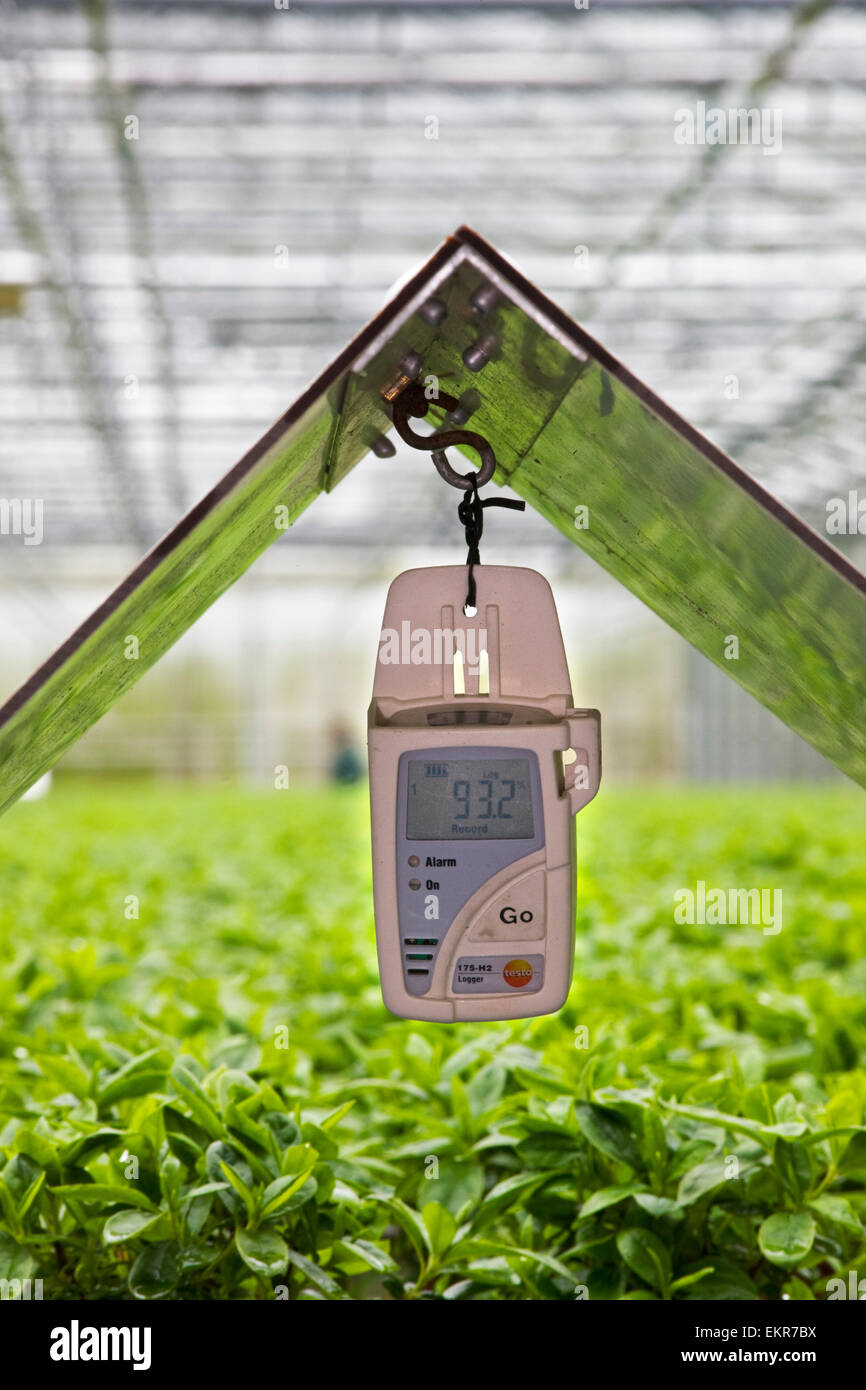 Temperature and humidity data logger in greenhouse - Stock Image
