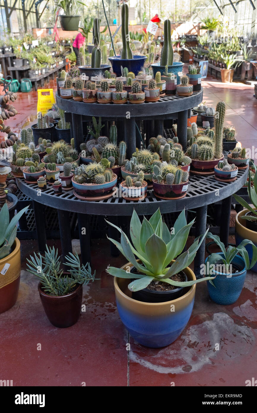 Cactus and Succulents for sale, Tohono Chul Park, Tucson, Arizona - Stock Image