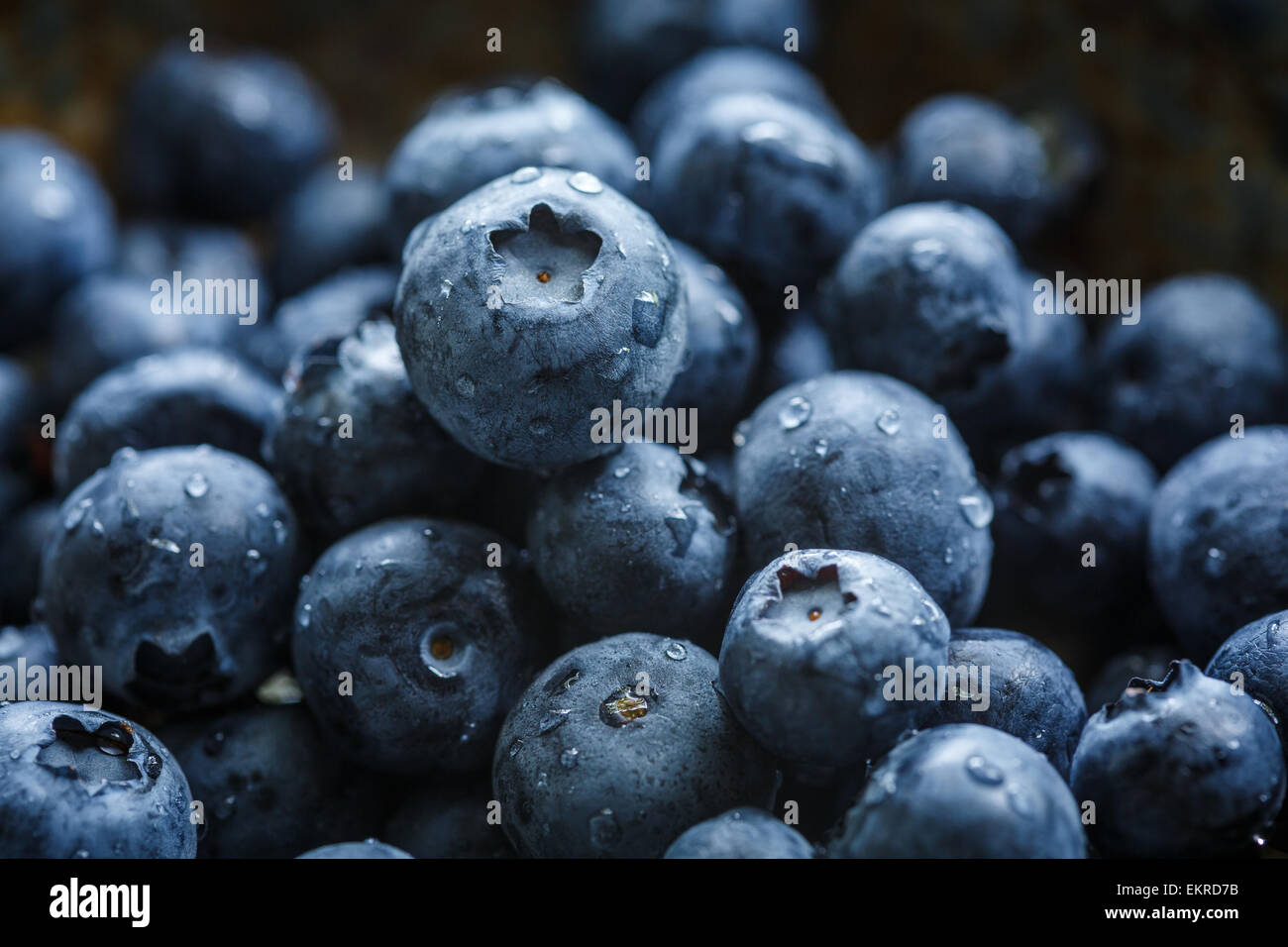 blueberries with water drops - Stock Image