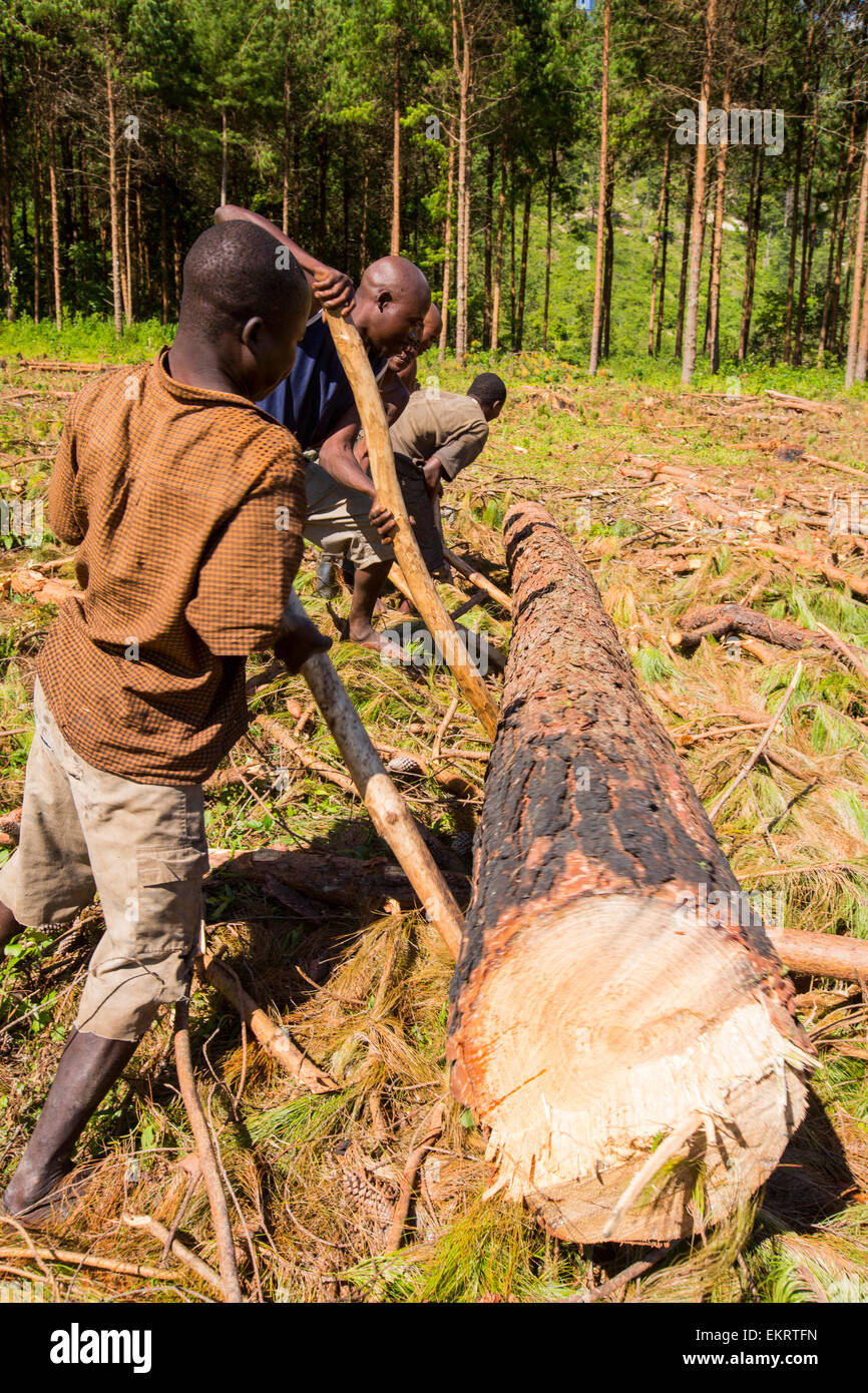Malawi is one of the poorest countries in the world, it has been heavily deforested. The deforestation has been - Stock Image