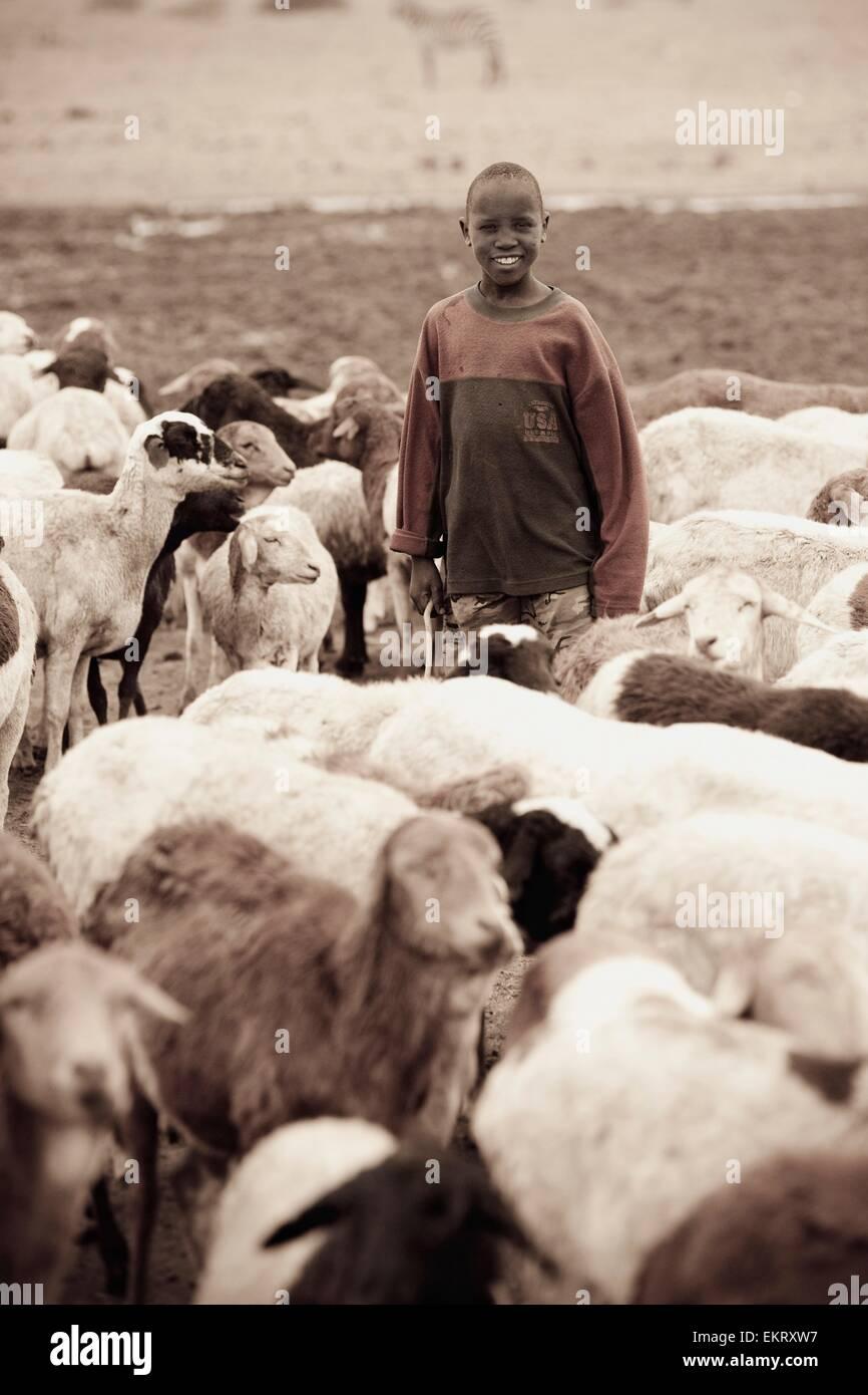Boy With Goats, Kenya, Africa - Stock Image