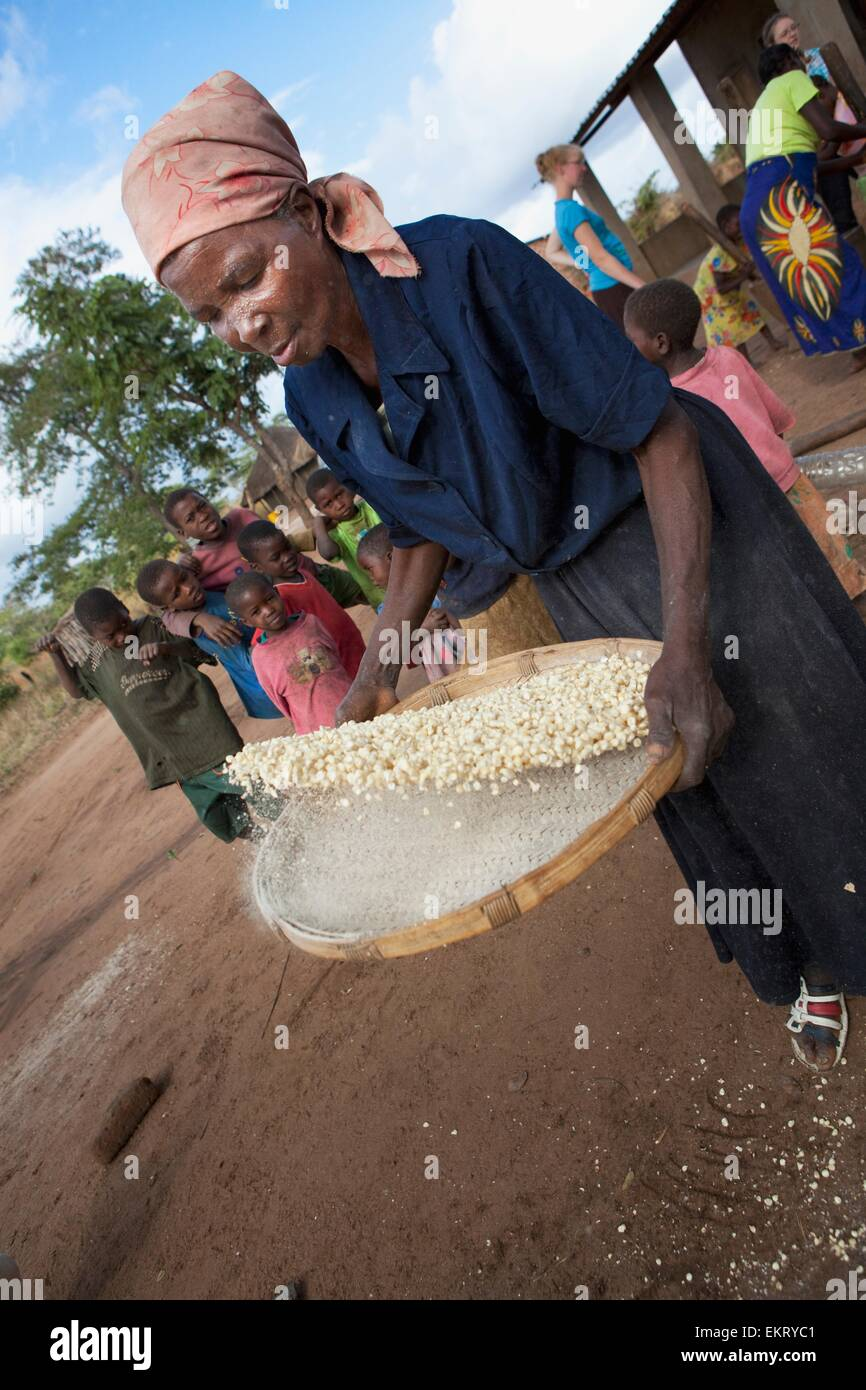 A Woman Separating Chaff From Corn Kernels By Hand; Manica, Mozambique, Africa - Stock Image