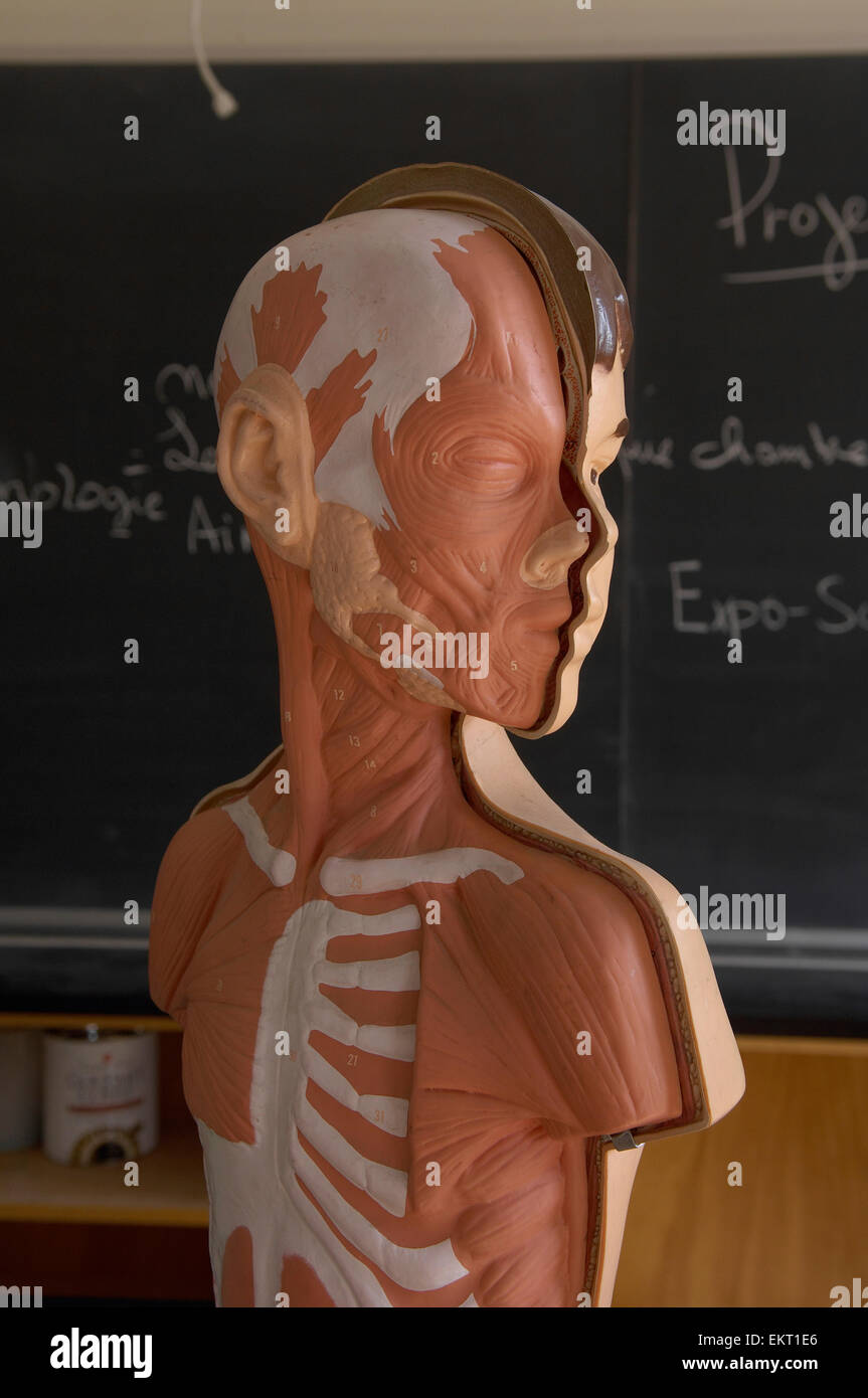 Anatomy Model Of Boy In French School Classroom Toronto Ontario