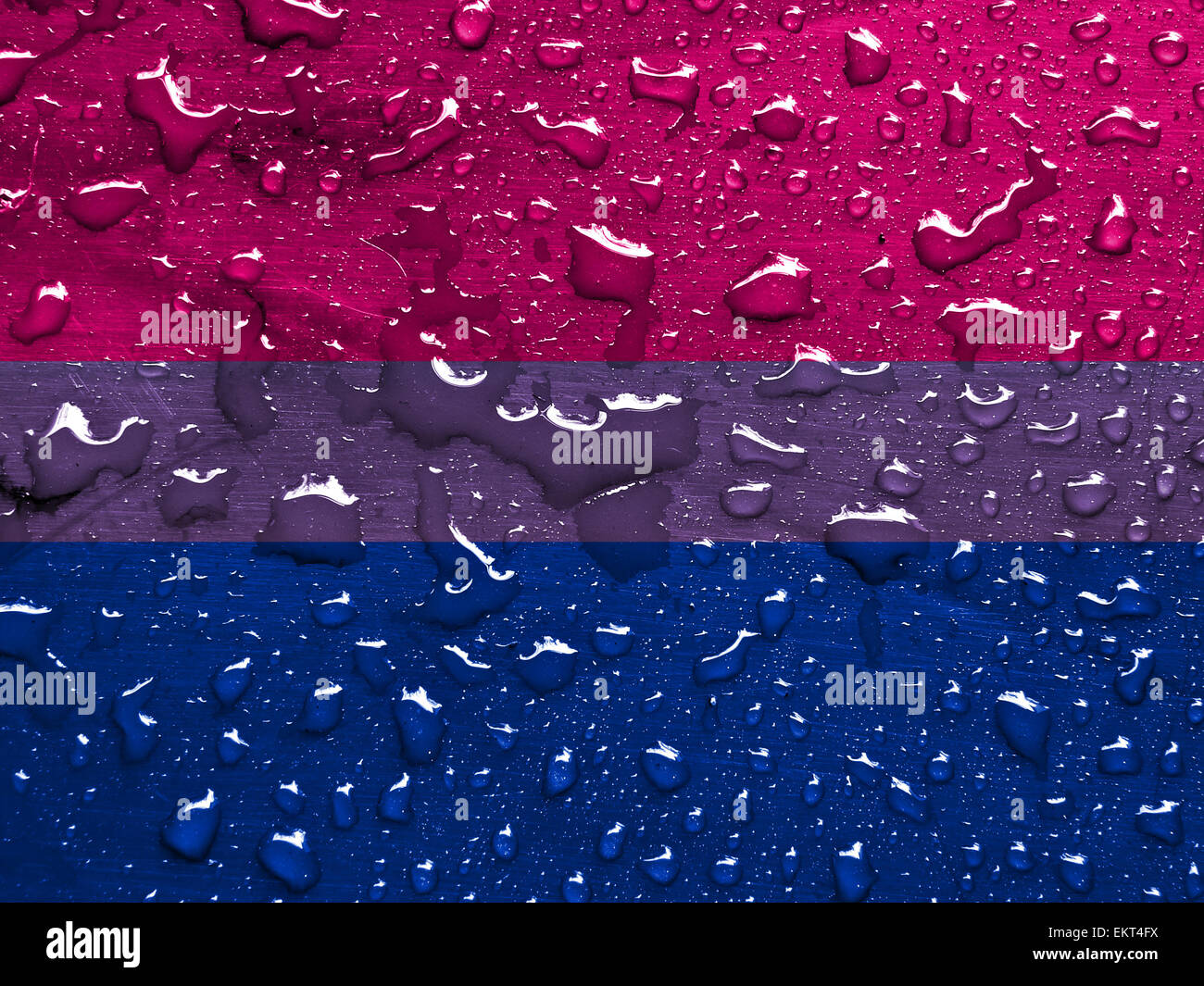 flag of Bisexual pride with rain drops - Stock Image