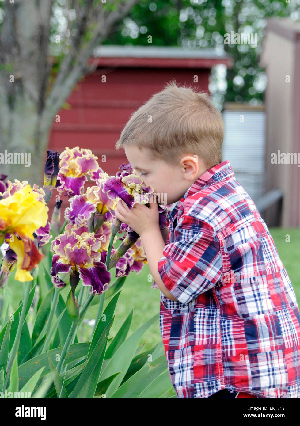 Child smelling Iris flowers - Stock Image