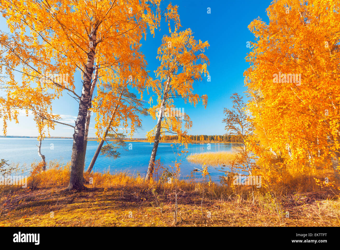 Autumnal Park. Autumn Trees and Leaves Stock Photo