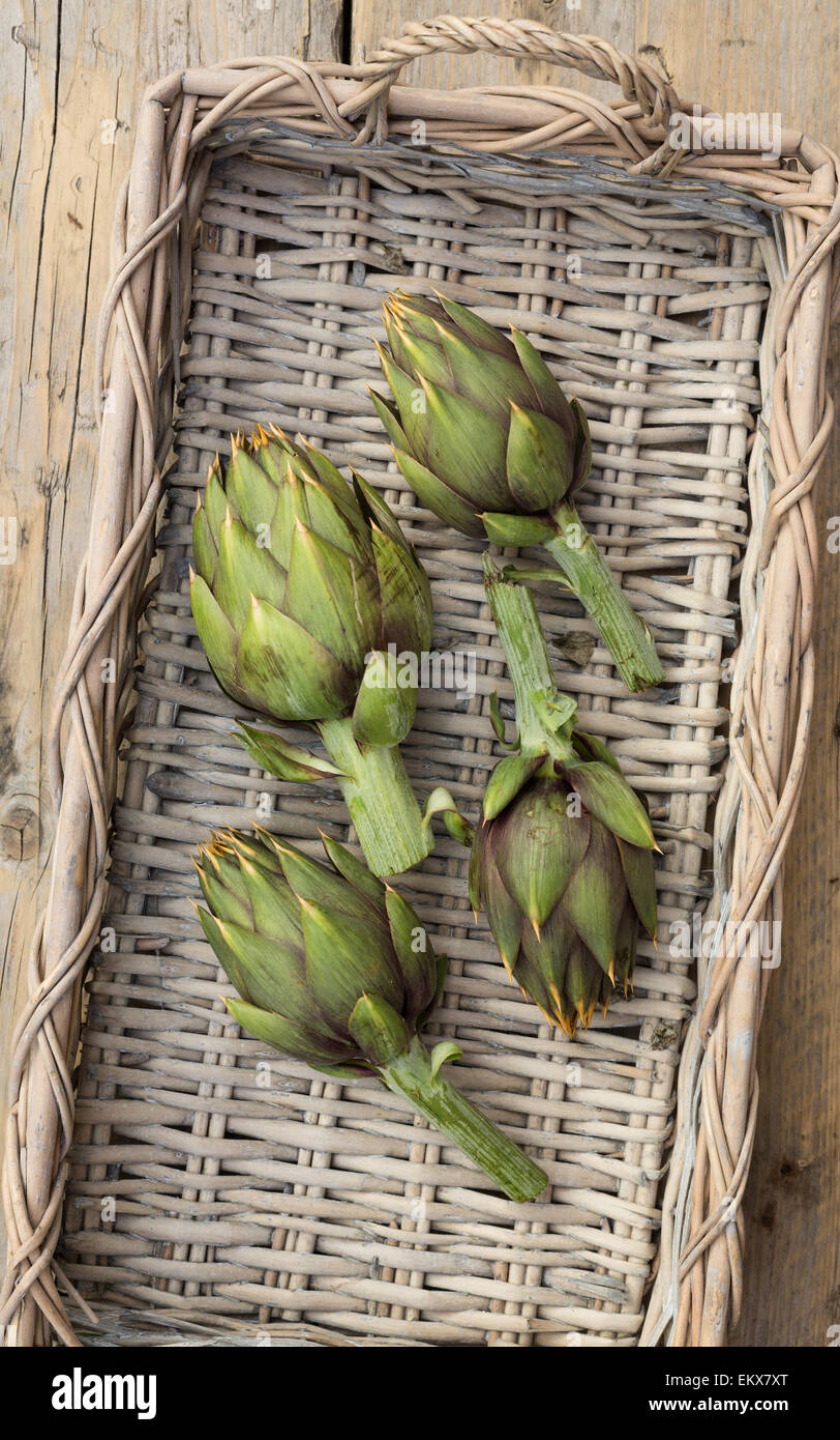 fresh artichokes from Sardinia in a basket, from above - Stock Image