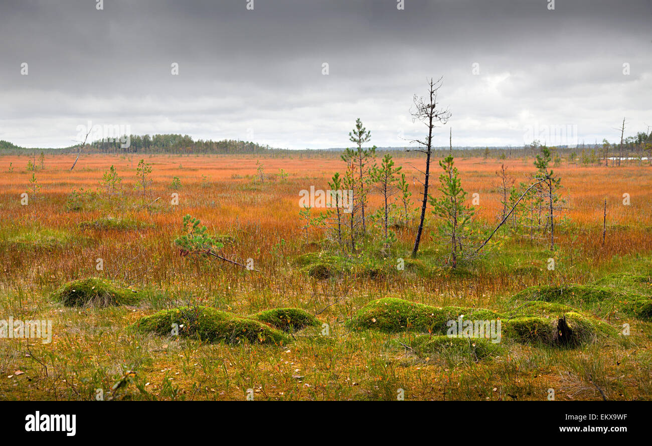 Northern marshes - Stock Image