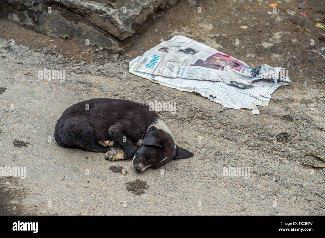 A puppy is sleeping on the ground in Kathmandu, Nepal Stock Photo