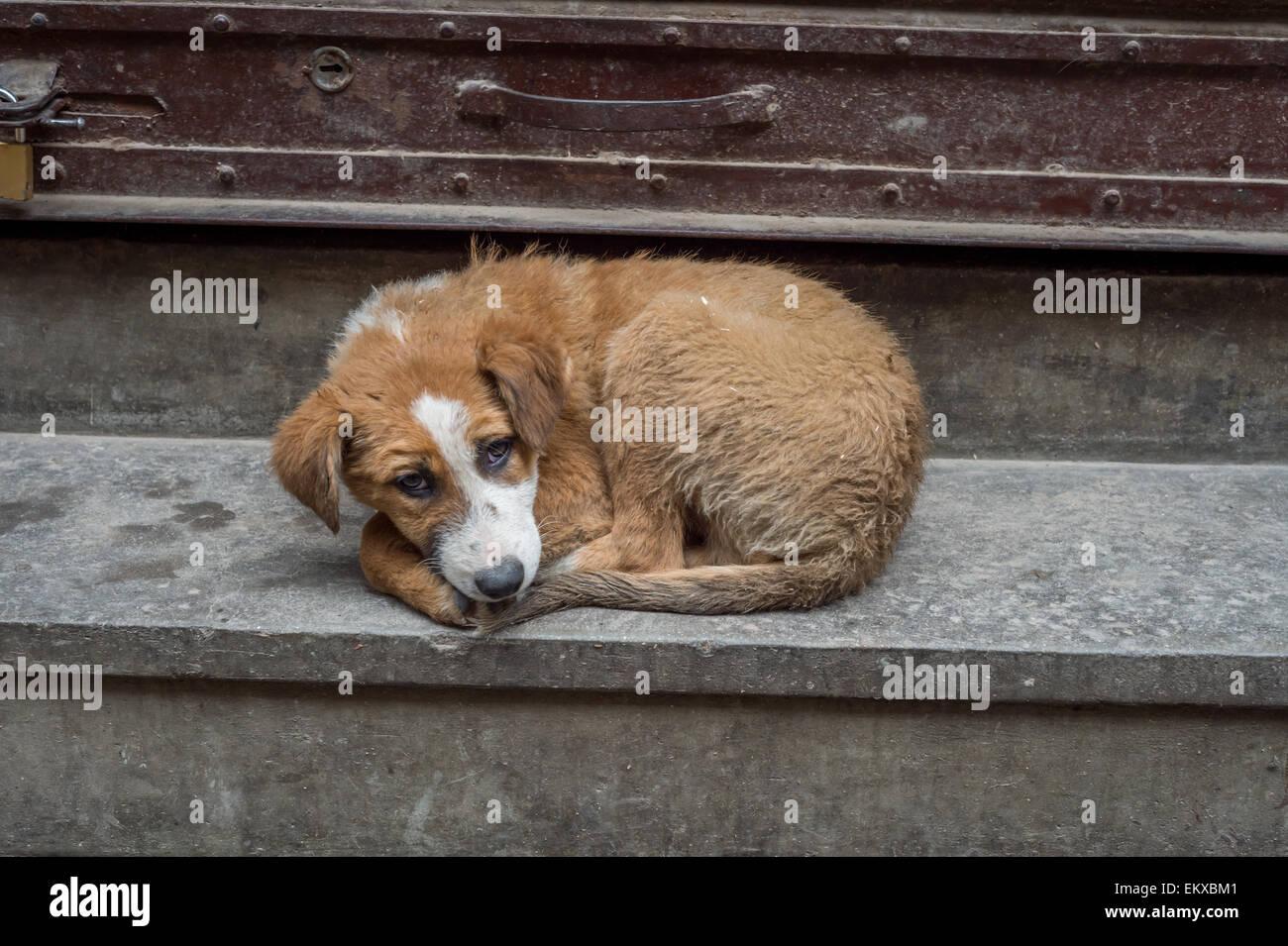 Abandoned Wet And Sad Dog Under The Rain In Kathmandu
