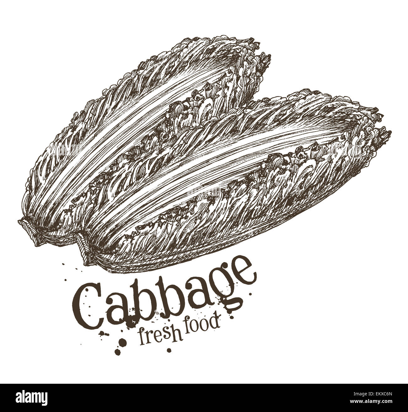 ripe cabbage vector logo design template fresh vegetables food or