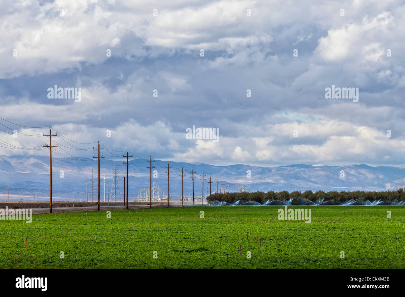 Crops being irrigated in Kern County, San Joaquin Valley, California, USA - Stock Image