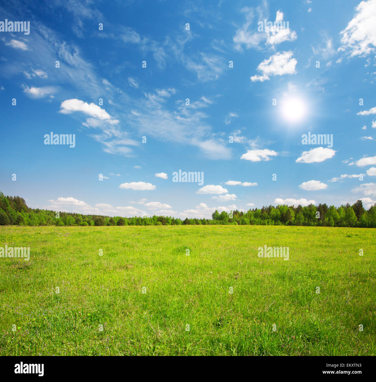 green field and blue cloudy sky - Stock Image