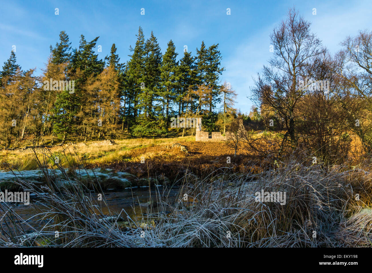 The ruined croft, Spital Cott, in Aberdeenshire, Scotland. - Stock Image