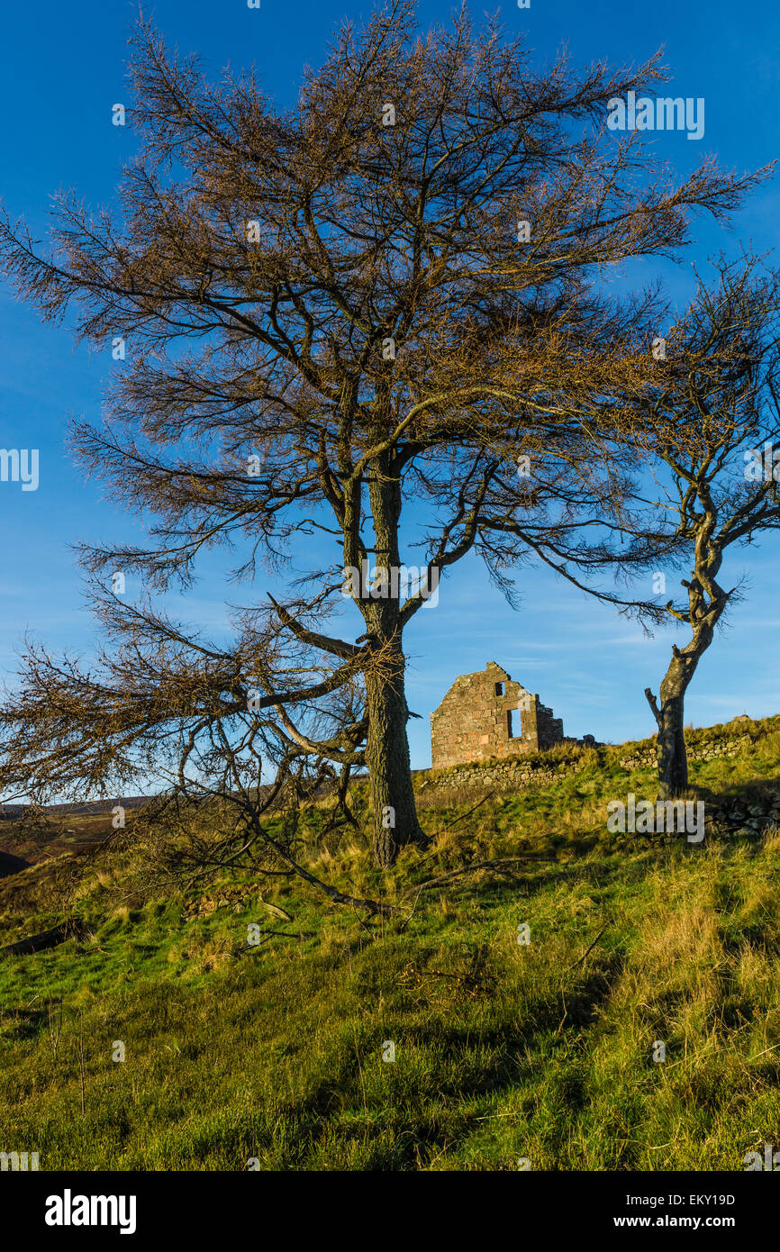 Old ruined croft building on Redstone Hill beside the Cairn a Mount, Aberdeenshire, Scotland. - Stock Image
