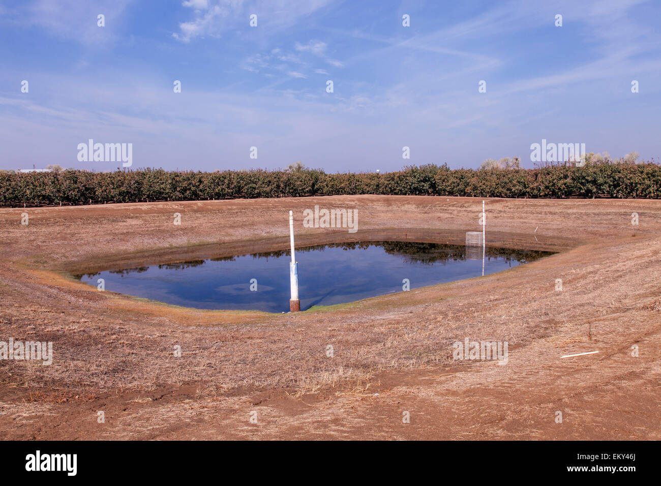 A return Pond is located at the lowest corner of a crop field to retain rainwater and irrigation drainage, Tulare - Stock Image