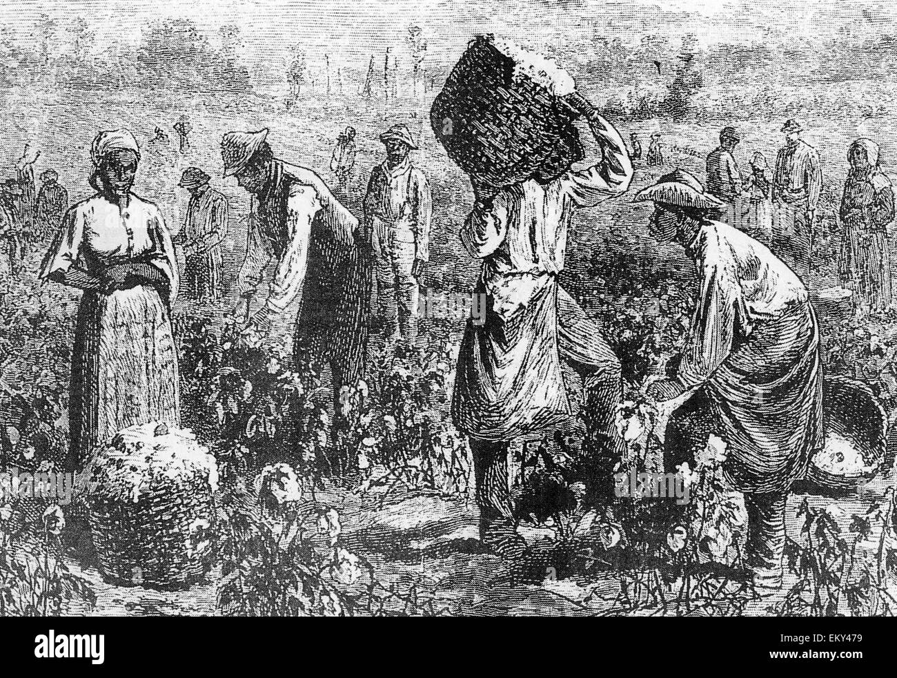 picking cotton The harvesting of cotton 1859 opportunities for industry and the safe investment of capital the season of cotton-picking commences in the latter part of july, and.
