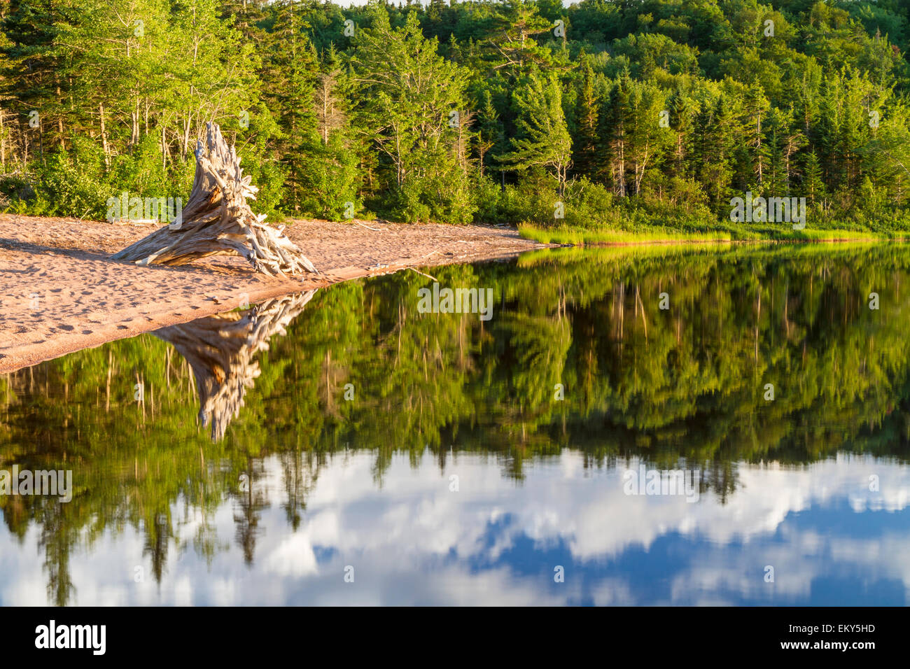 A forest reflected with a driftwood tree on the beach during golden hour at Warren Lake in Cape Breton Highlands - Stock Image