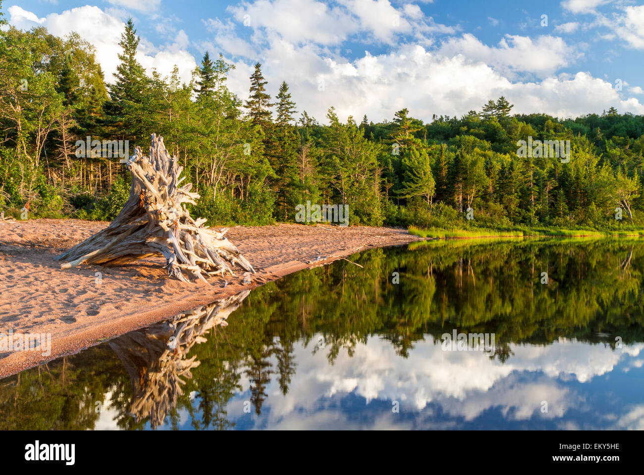 A large driftwood tree on the beach, forest and sky reflected in Warren Lake in Cape Breton Highlands National Park, - Stock Image