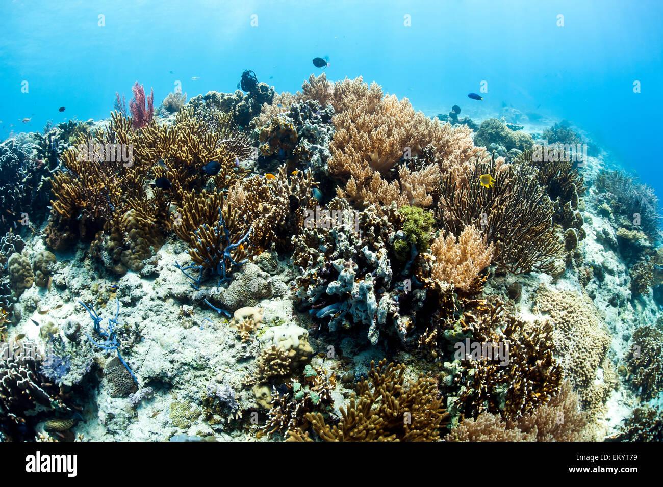 Coral reef at Menjangan, Bali, Indonesia island - Stock Image
