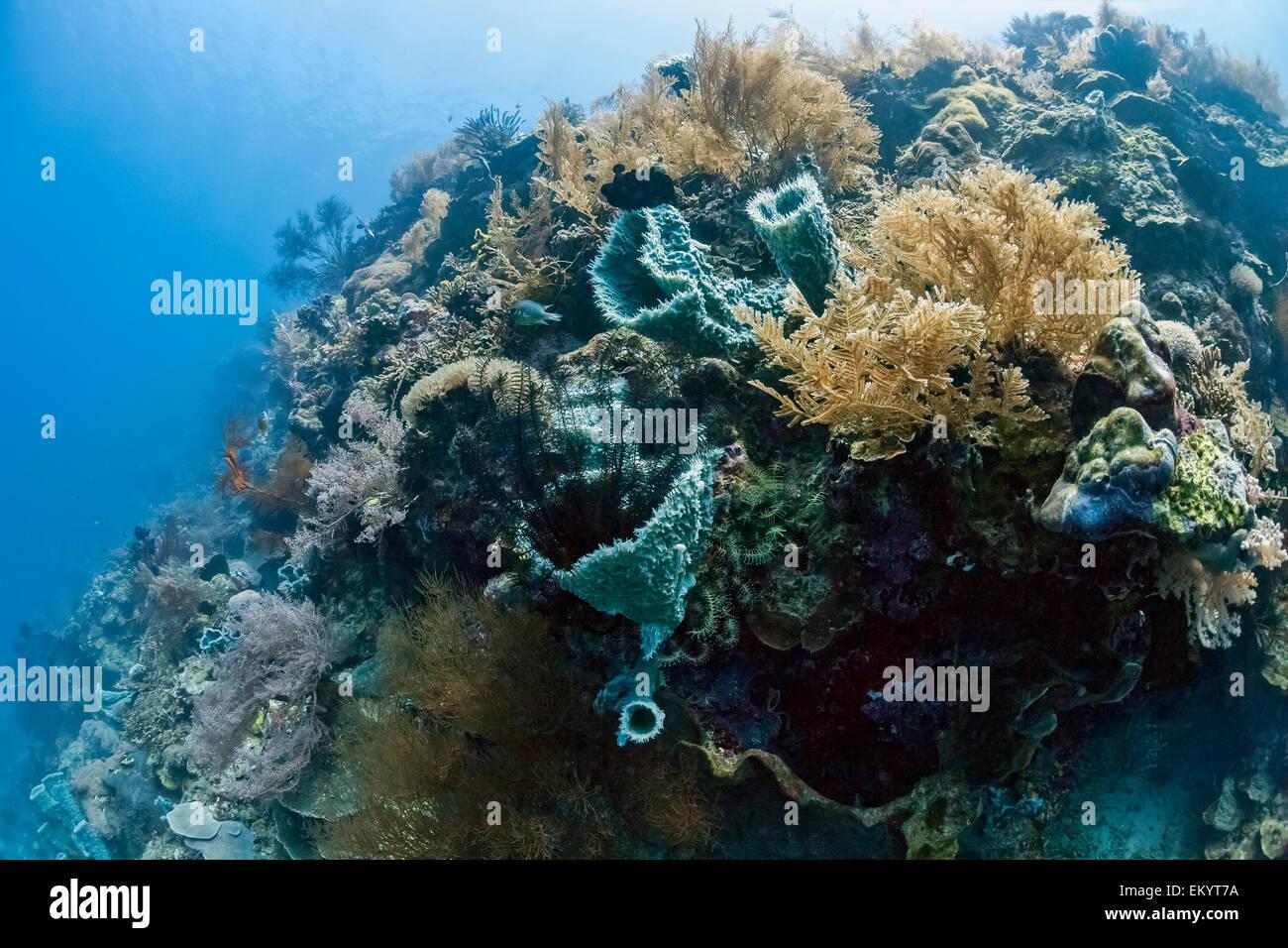 Tropical coral reef at Menjangan, Bali, Indonesia island - Stock Image