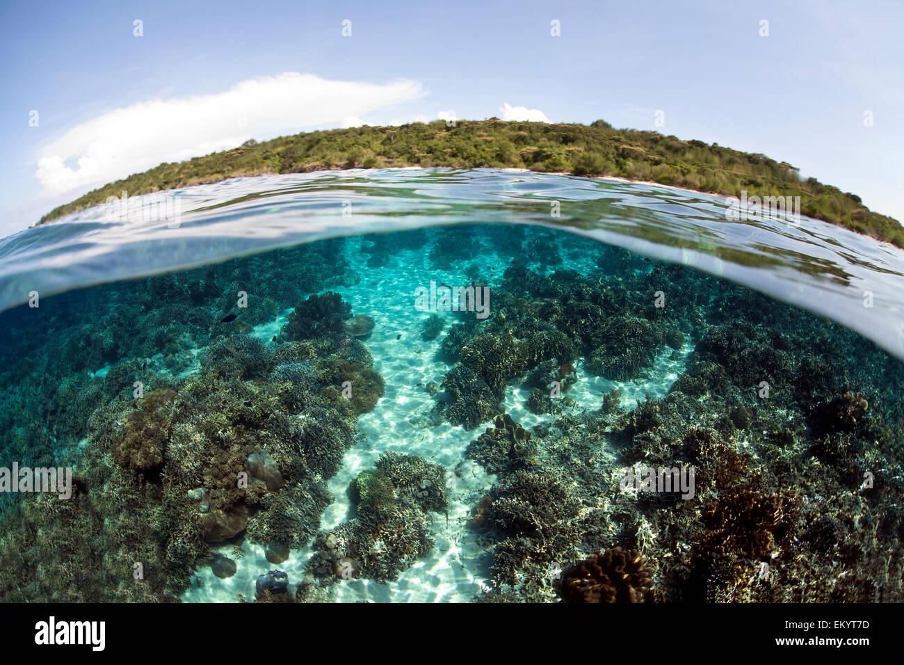 Split photo, underwater world and Menjangan Island, Bali, Indonesia - Stock Image