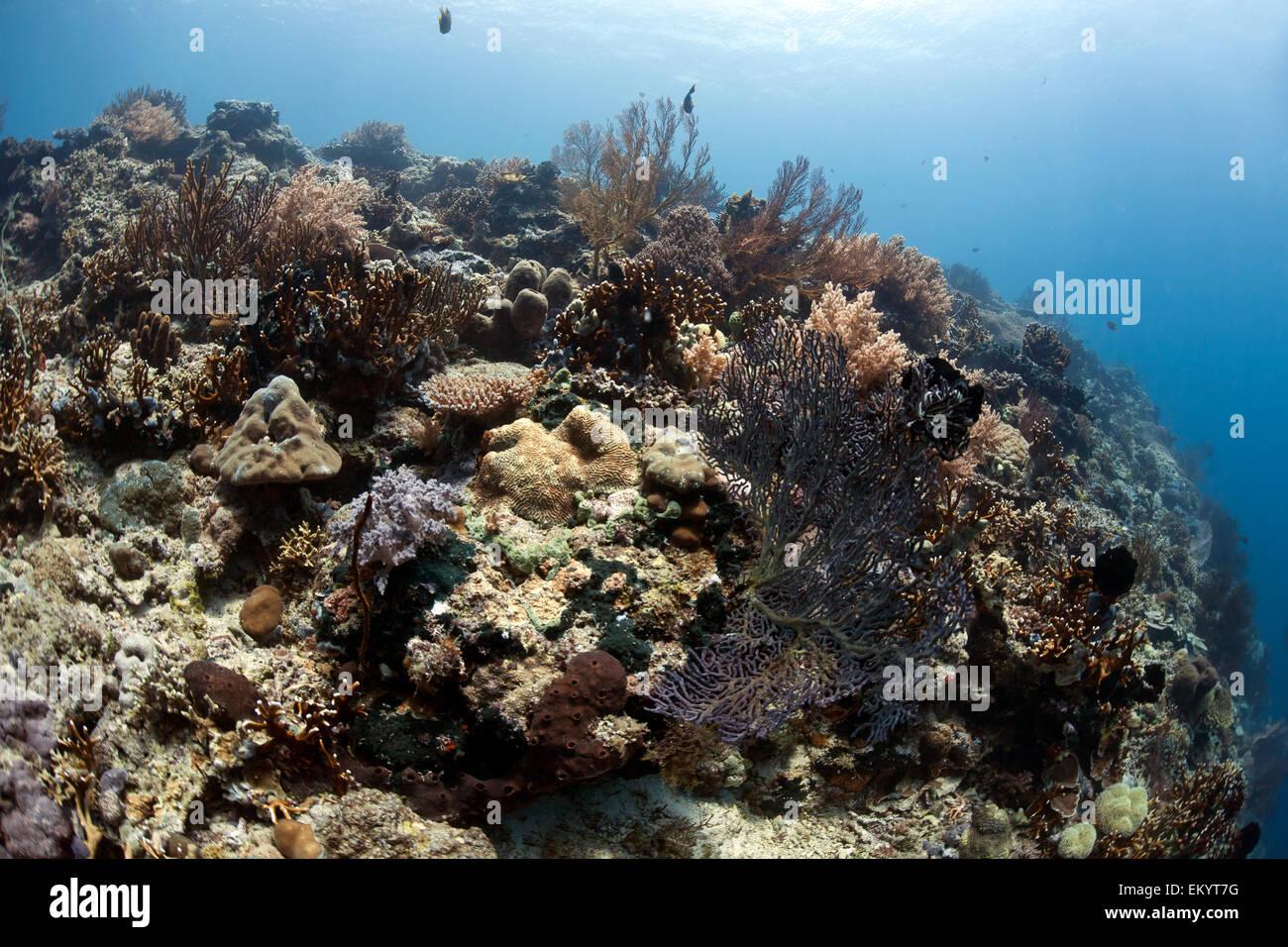 Tropical coral reef off Menjangan, Bali - Stock Image