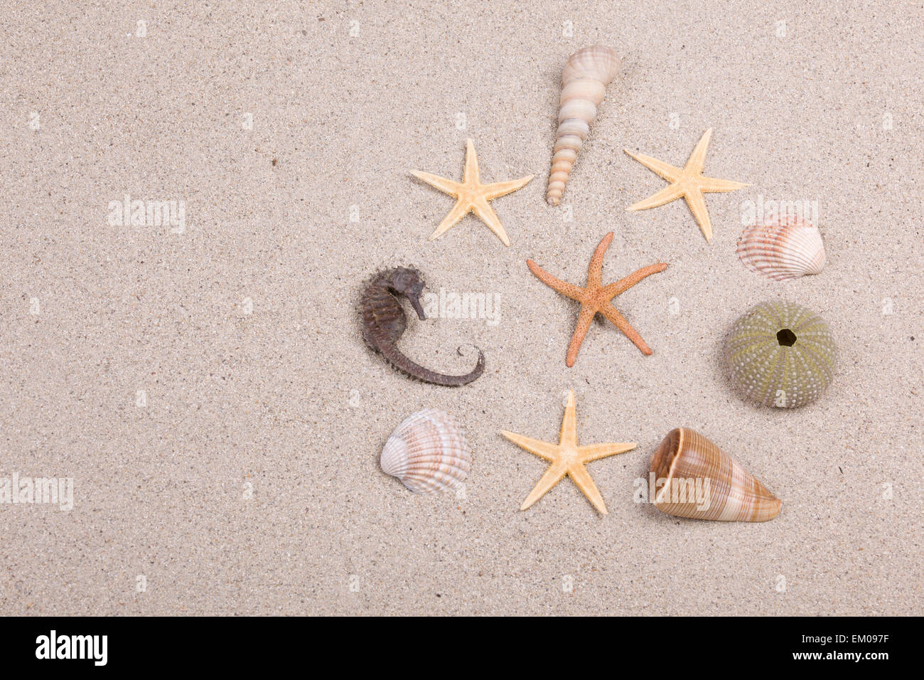 starfish and shells on the beach, vacation memories - Stock Image