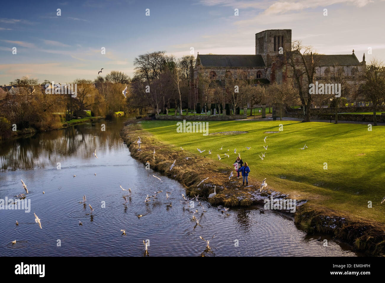 People feeding birds on the River Tyne beside St Mary's Collegiate Church, Haddington, Scotland. - Stock Image