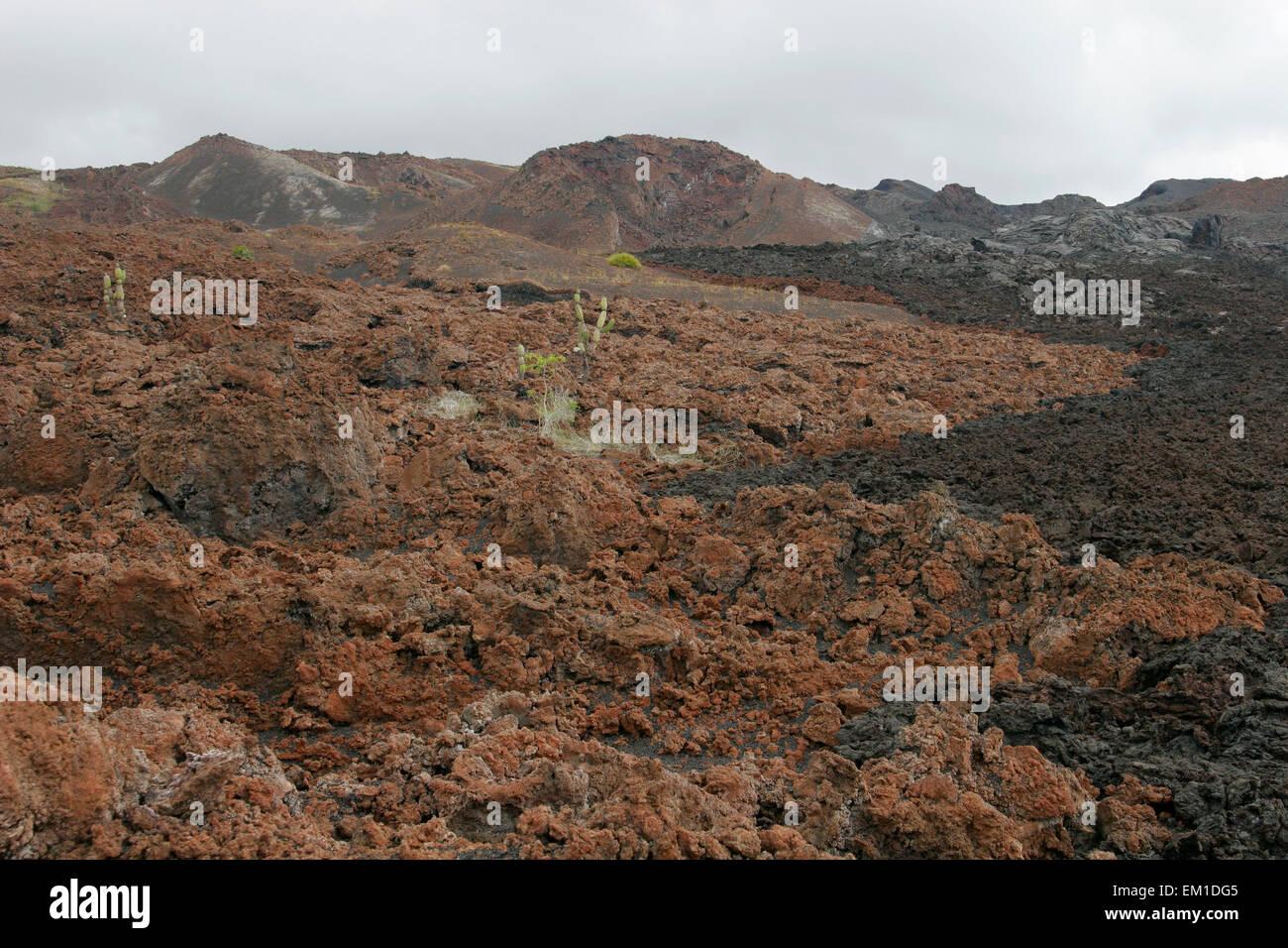 Lava fields of Sierra Negra volcano, Isabela Island, Galapagos, Ecuador, South America - Stock Image