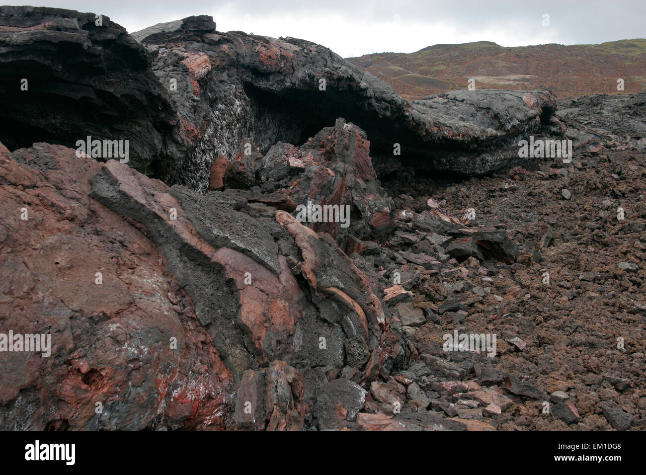 Lava field of Sierra Negra volcano, Isabela Island, Galapagos, Ecuador, South America - Stock Image