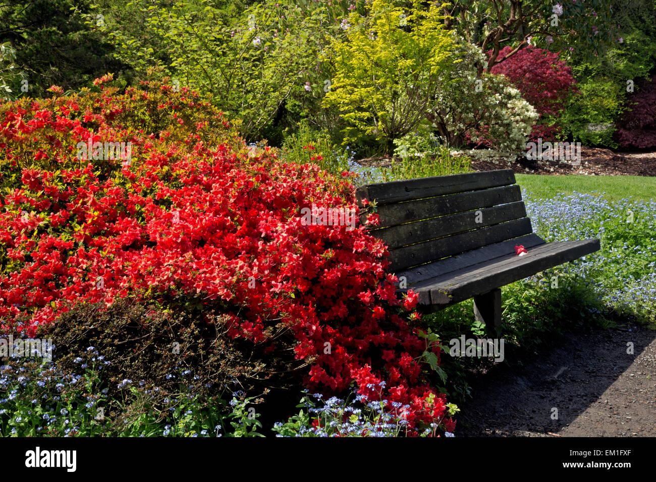 WA10290-00...WASHINGTON - Azaleas growing around a bench at Kubota Garden in Seattle. - Stock Image