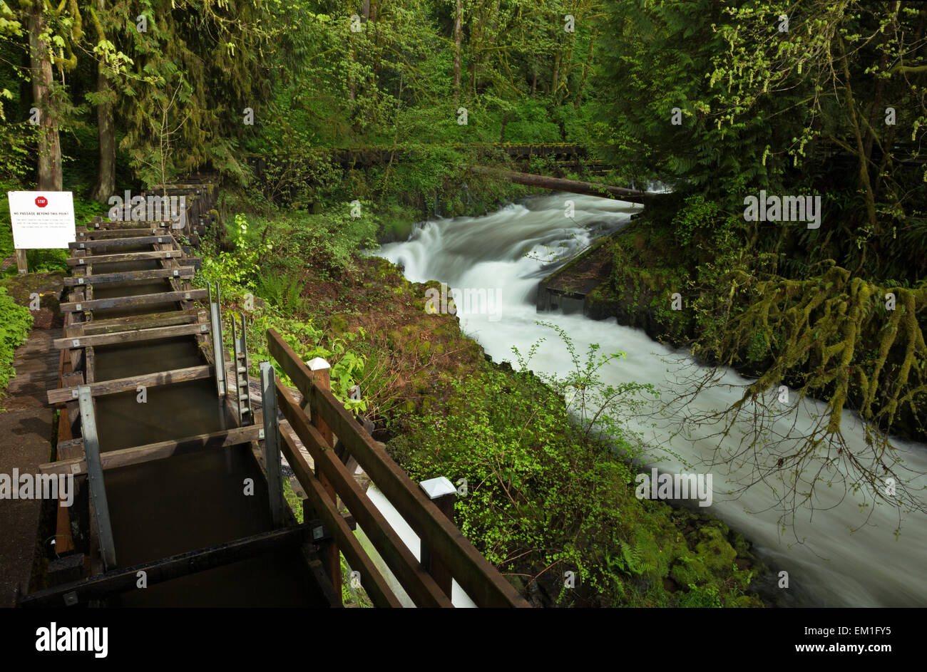 WA10293-00...WASHINGTON - The Cedar Creek and a sluice above the historic Cedar Creek Grist Mill. - Stock Image