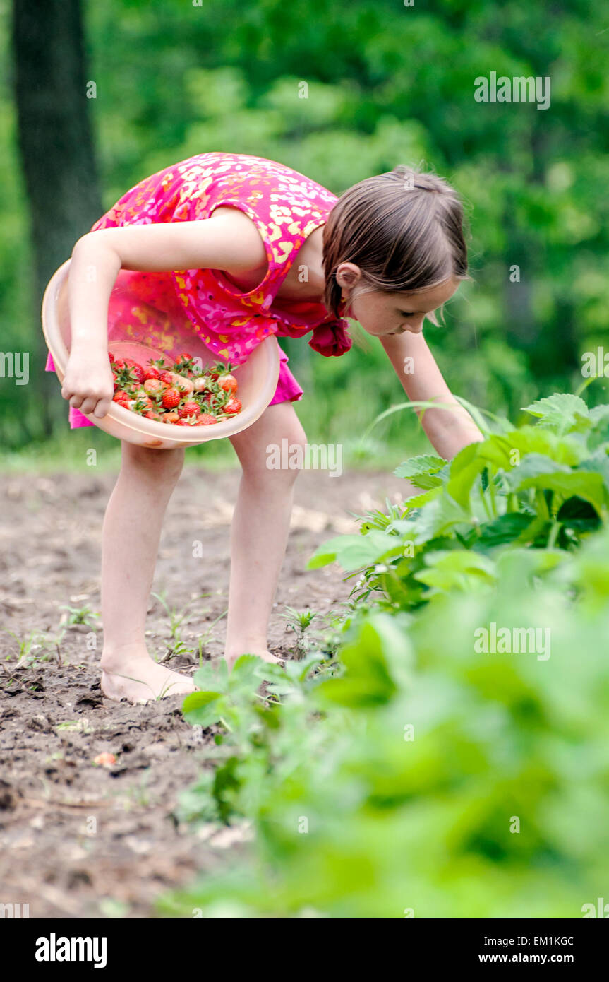 girl picking strawberries - Stock Image