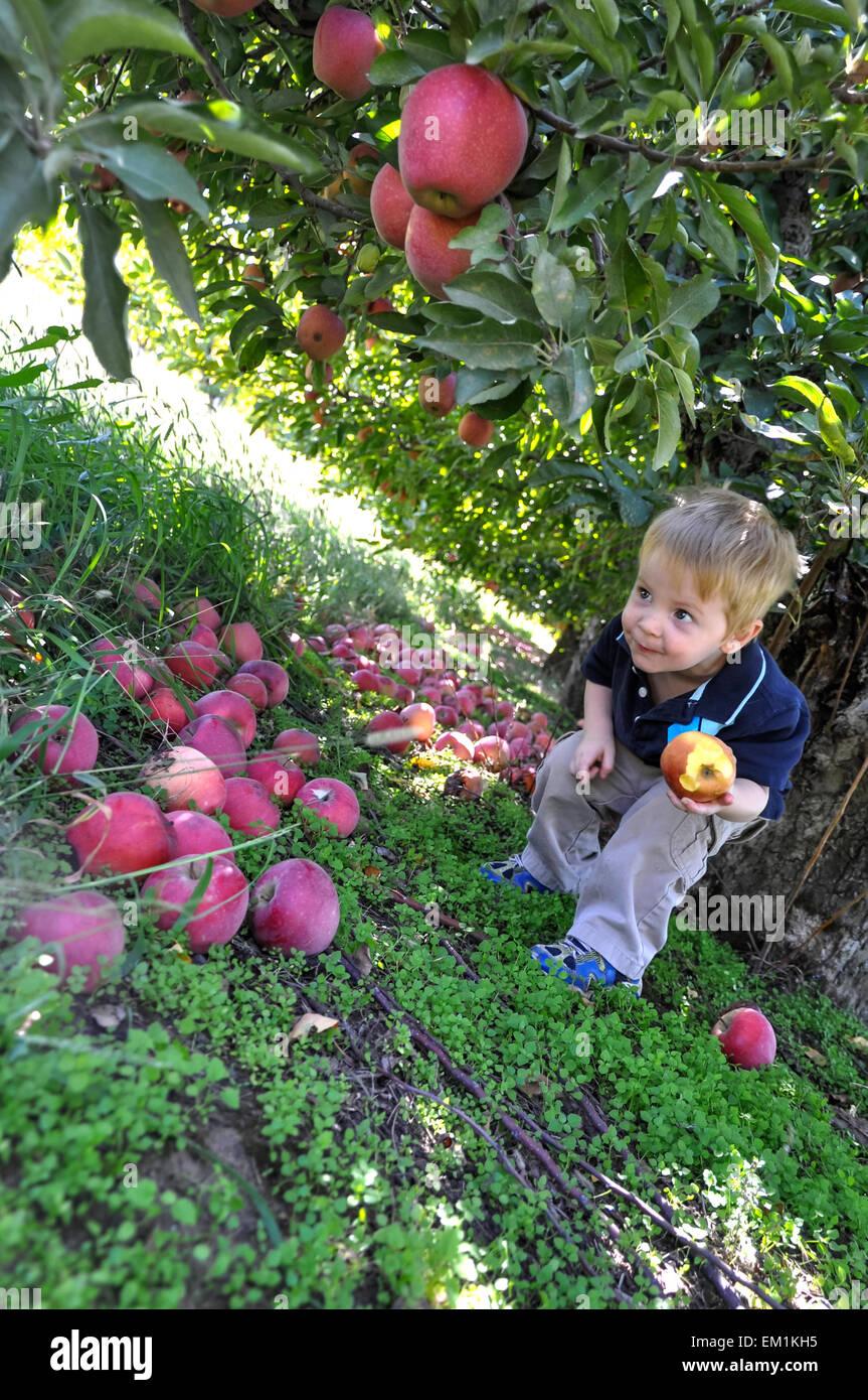boy under apple tree - Stock Image