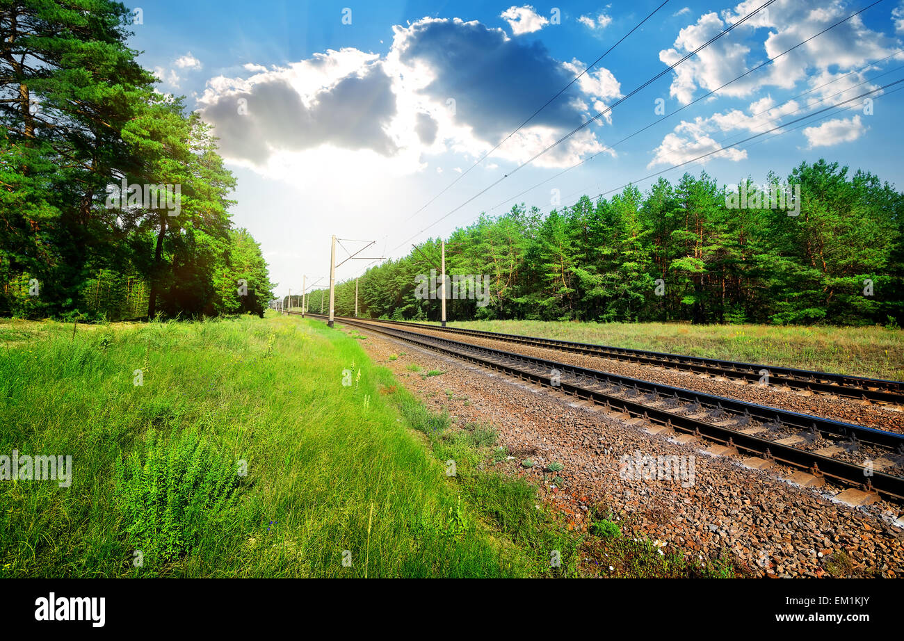 Railroad through the pine forest at sunny day - Stock Image