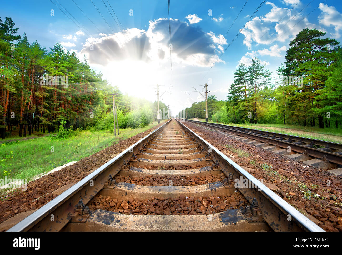 Railroad through the green pine forest close-up - Stock Image