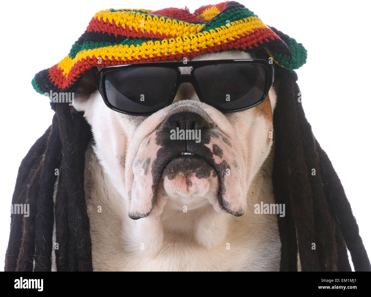 funny dog with dreadlock wig on white background - Stock Image