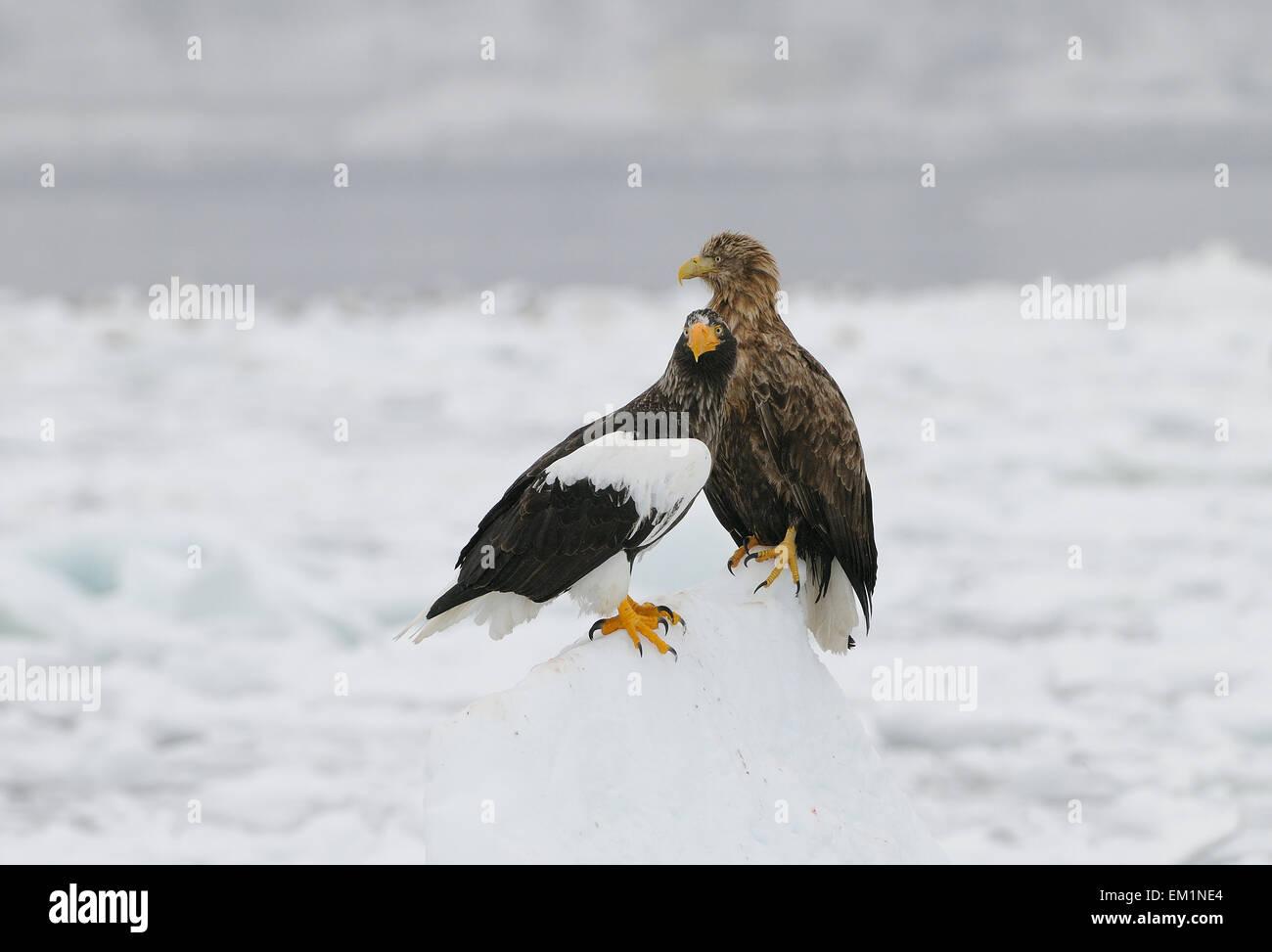 Bird Of Prey Talons 1