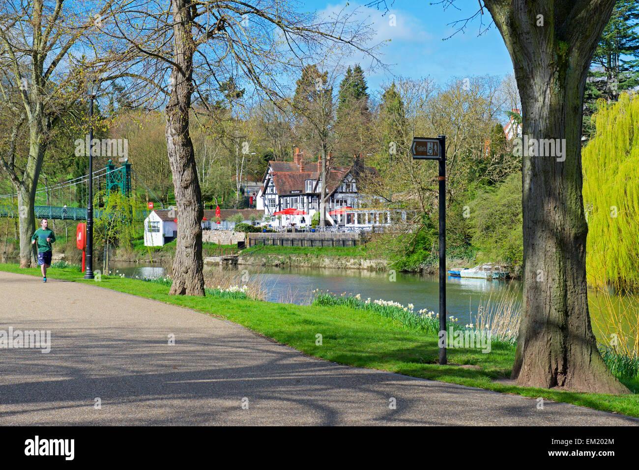 Man jogging on path next to the River Severn, Shrewsbury, Shropshire, England UK - Stock Image