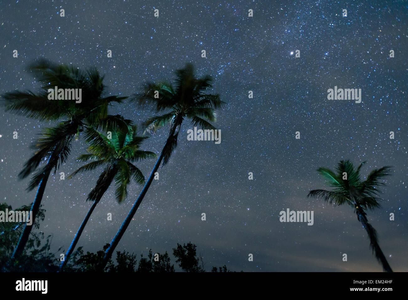 Stars in night sky appear above palm trees, Bahia Honda State Park, Bahia Honda Key, Florida. - Stock Image